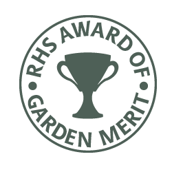 This plant has received the RHS Award of Garden Merit